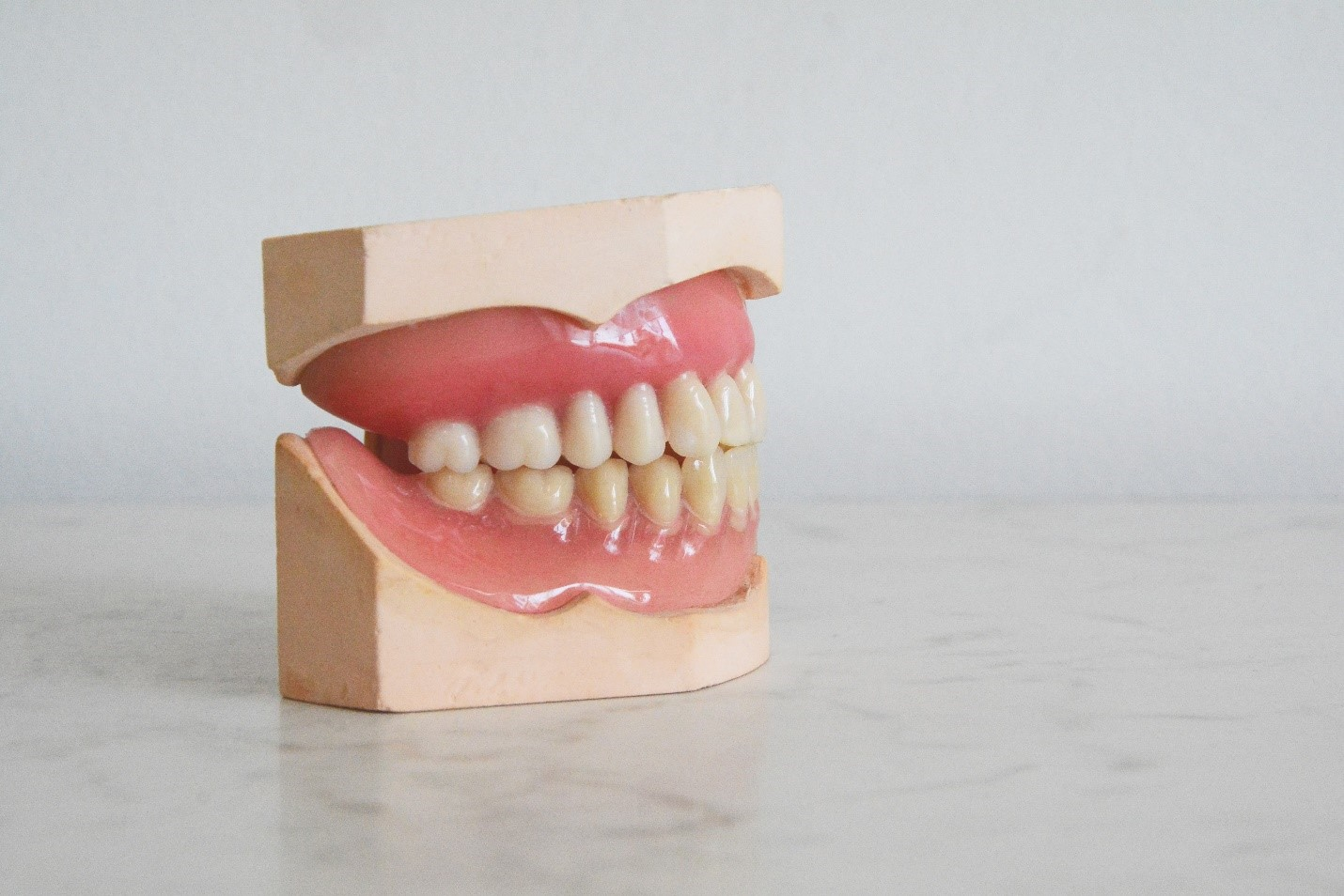 A model of teeth for dentists.